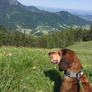 Wanderung mit Hund